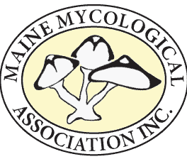 Maine Mycological Association